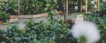 4 Things To Consider Before Starting Your Own Vegetable Garden